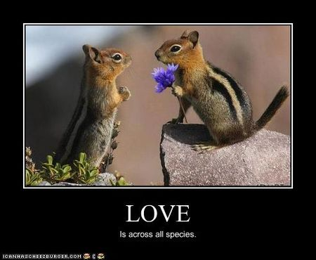 Funny-pictures-chipmunks-have-love