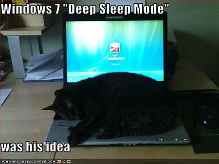 Funny-pictures-cat-sleeps