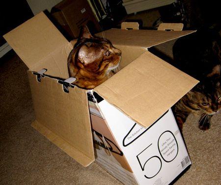 Fiki-in-box-1