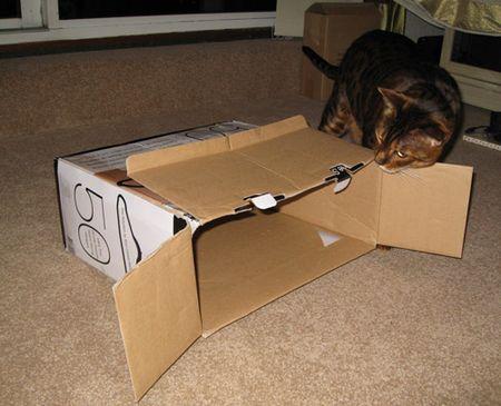 Fiki-in-box-3