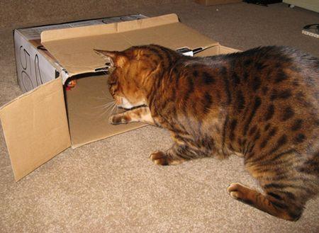 Fiki-in-box-4