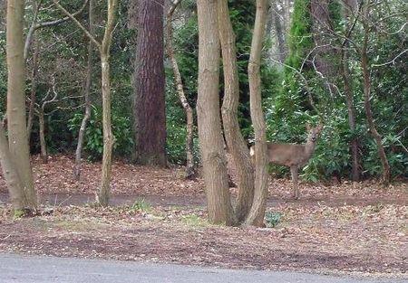 086 27 March deer