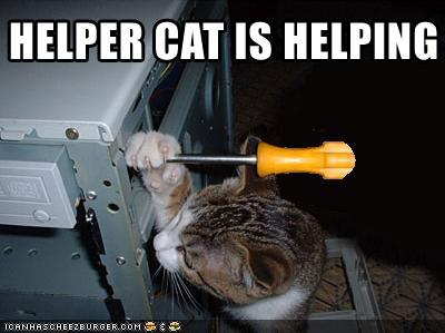 Funny-pictures-cat-is-helping