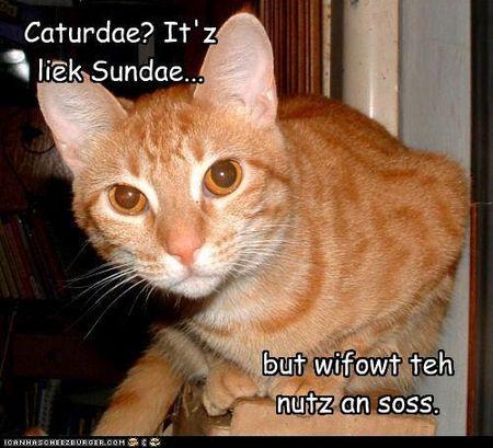 Caturday 1
