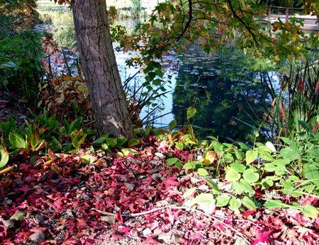Hillier-leaves