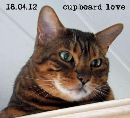 109-cupboard-love