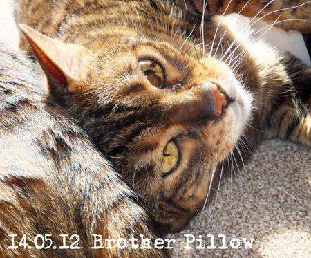 135--kira-pillow