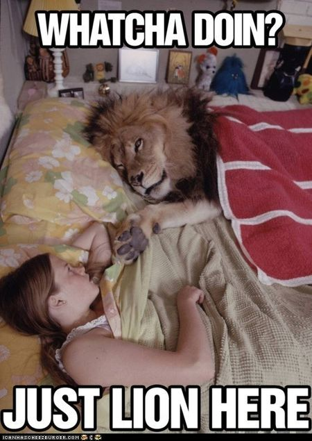 Lion here