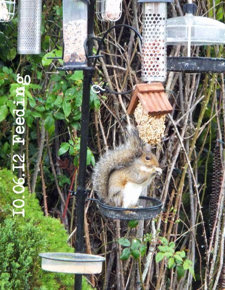 162-squirrel