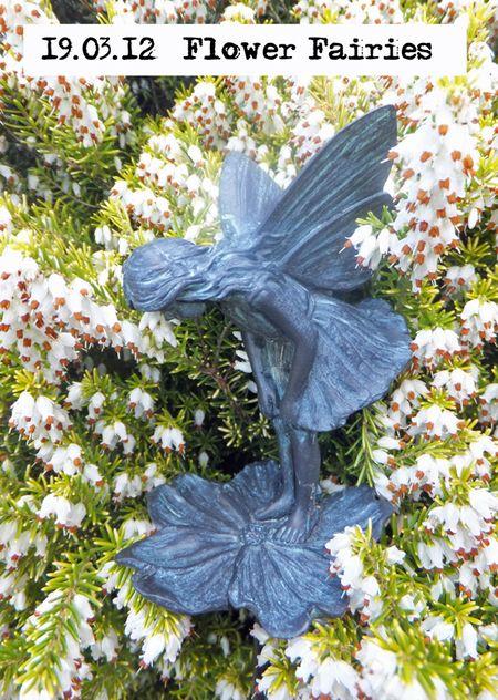 79-flower-fairies