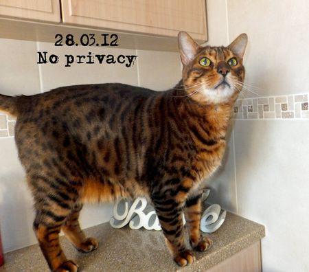 88-no-privacy