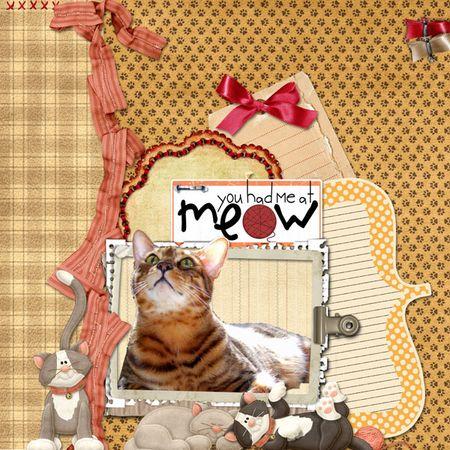 2-patterns-cat