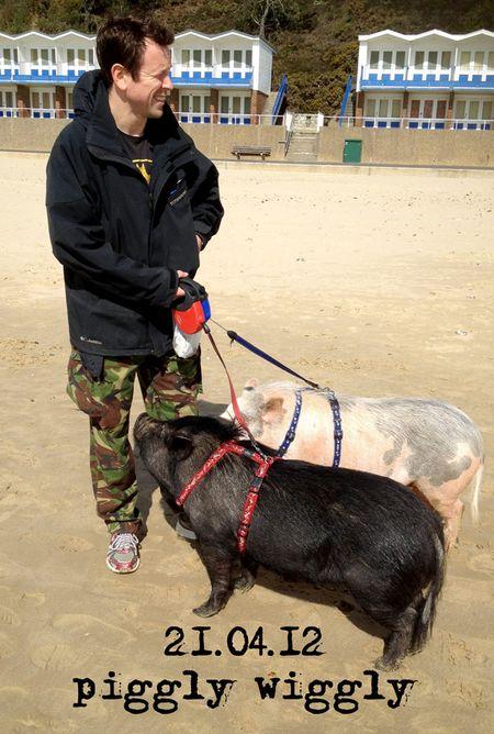 112-pig-walking
