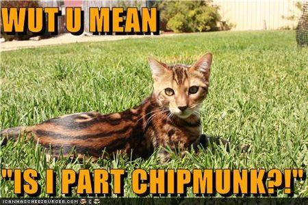 -chipmunk