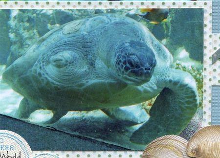 Turtle treek close