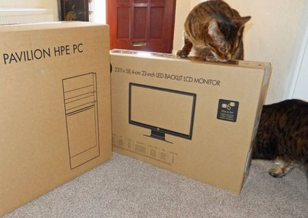 Cat-scan-1