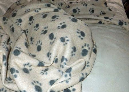 Fiki-bed-2