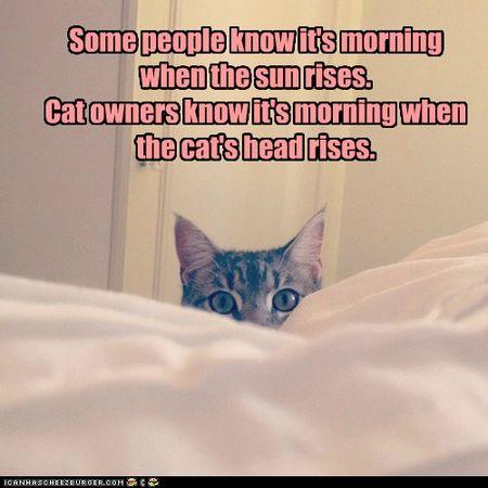 Morning rises