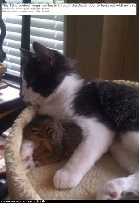 Squirrel and cat