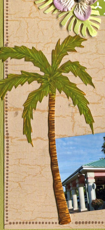 Welcome-to-islands-palm