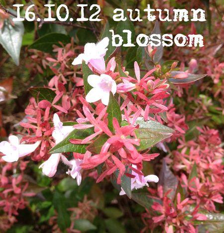 290-winter-blooms