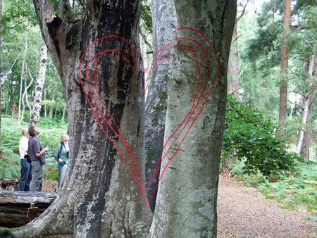 Brownsea-hearts-2