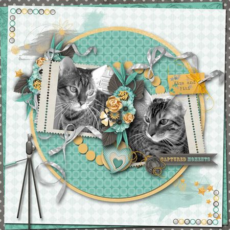 PB-Feb-cats