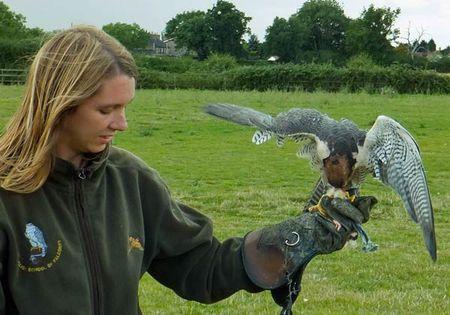 Birds-Carly-falcon