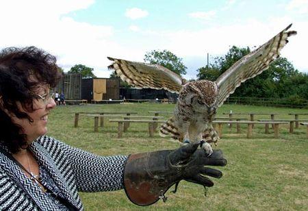Birds-karen-owl-1