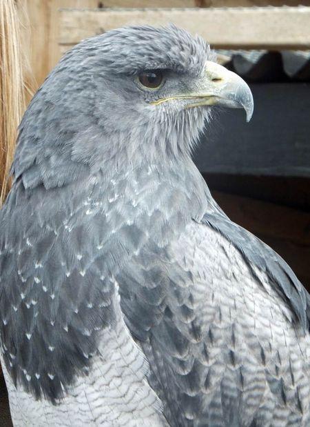 Birds-Lincoln-1