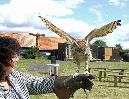 Birds-Karen-owl