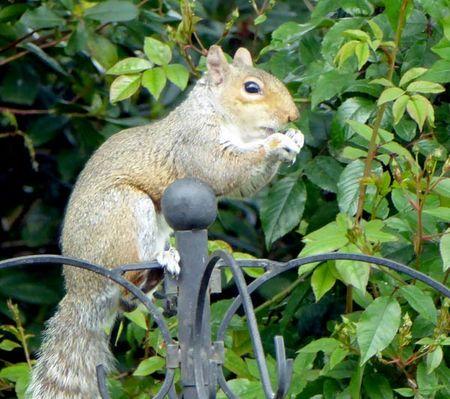 Squirrel-1