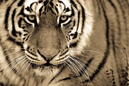 Big-cats-ive-spent-10-years-photographing-these-wild-and-loving-creatures-9__880