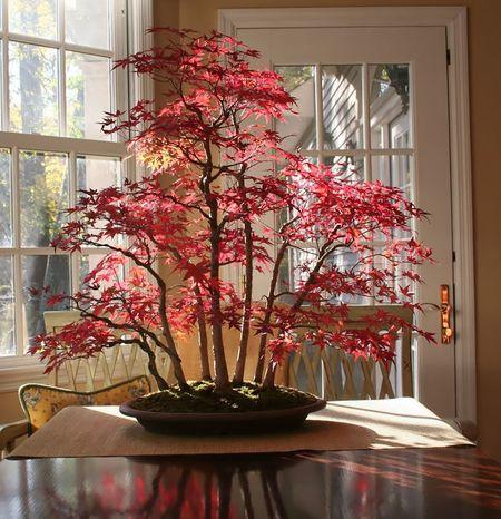 Amazing-bonsai-trees-15-5710eeb31ea38__700