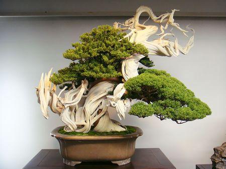 Amazing-bonsai-trees-22-5710f3ab92e45__700