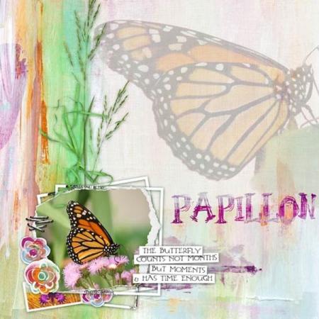 Papillon-18-34b0850c7e