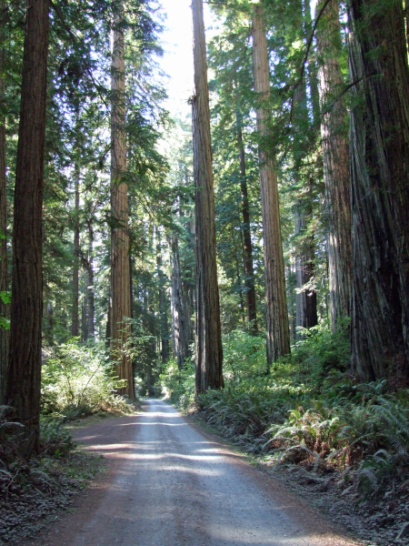 8 redwood 3