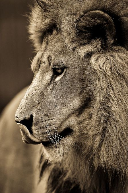 Big-cats-ive-spent-10-years-photographing-these-wild-and-loving-creatures-10__880