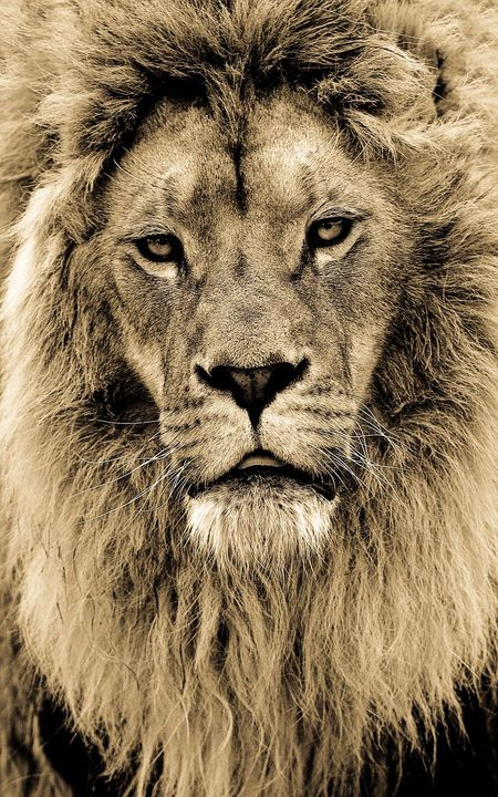 Big-cats-ive-spent-10-years-photographing-these-wild-and-loving-creatures-4__880