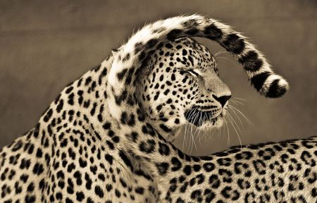 Big-cats-ive-spent-10-years-photographing-these-wild-and-loving-creatures__880