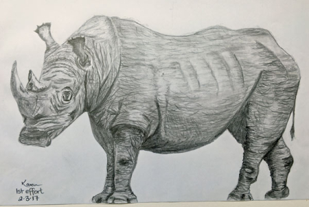 Rhino---sketch-1