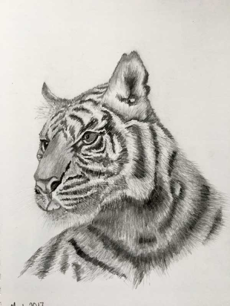 Tiger-improved