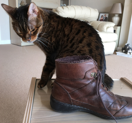 Boot kira