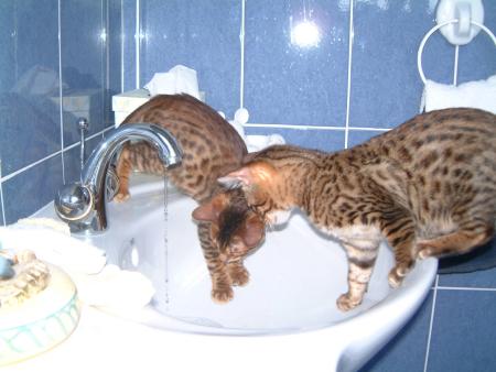In sink