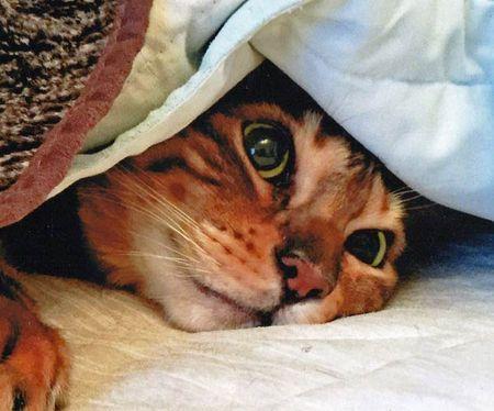 Snuggle-4