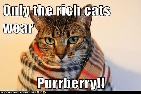 Purrberry