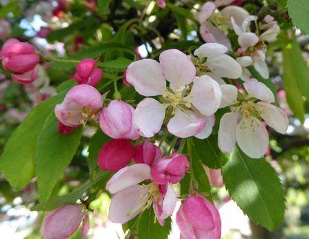 Blossom-2