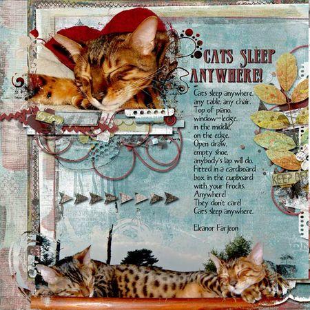 Cats-sleep-anywhere