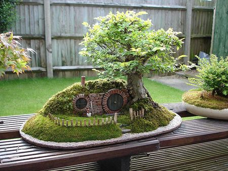Amazing-bonsai-trees-31-5710fa291dd89__700