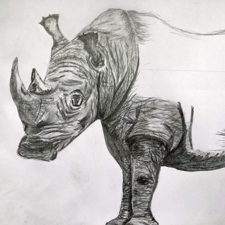 Rhino-small